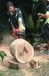 Cut half a huge log 1 Bev Dunbar Maths Matters