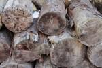 Cylindrical Logs Bev Dunbar Maths Matters