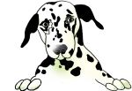 Dalmatian dog - John Duffield duffield-design