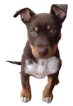 Dog Fifths - 1 out of 5 dogs - Bev Dunbar Maths Matters