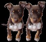 Dog Fifths - 2 out of 5 dogs - Bev Dunbar Maths Matters