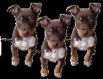 Dog Fifths - 3 out of 5 dogs - Bev Dunbar Maths Matters