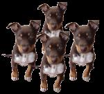 Dog Fifths - 4 out of 5 dogs - Bev Dunbar Maths Matters2 copy