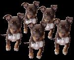 Dog Fifths - 5 out of 5 dogs - Bev Dunbar Maths Matters