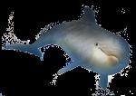 Dolphin - John Duffield duffield-design