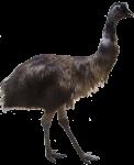 Emu Bev Dunbar Maths Matters