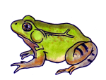 FROG - amphibian - facing left John Duffield duffield-design