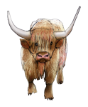 Farm animal - Hairy Bull John Duffield duffield-design