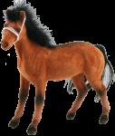 Favourite Toy Horse Bev Dunbar Maths Matters