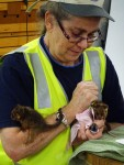 Feeding rescued baby creatures Bev Dunbar Maths Matters