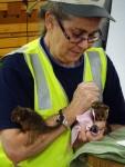 Feeding rescued baby creatures Bev Dunbar Maths Matters