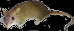 Field Mouse Bev Dunbar Maths Matters