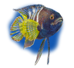 Fish - John Duffield duffield-design