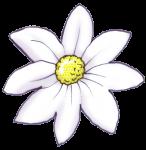 Flower - White - John Duffield duffield-design