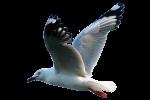 Flying Seagull (above) (Position F/1/2) Bev Dunbar Maths Matters