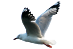 Flying-Seagull-Bev-Dunbar-Maths-Matters