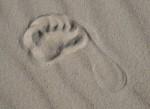 Footprint in Sand Bev Dunbar Maths Matters