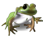 Frog - amphibian John Duffield duffield-design