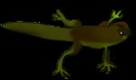 Froglette - frog life cycle John Duffield duffield-design