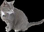 Fuzz Cat Bev Dunbar Maths Matters