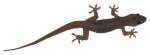 Gecko - Bev Dunbar Maths Matters