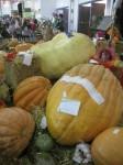 Giant pumpkins at the Show Bev Dunbar Maths Matters