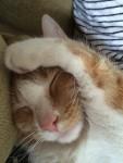Ginger cat sleeping Bev Dunbar Maths Matters