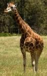 Giraffe Bev Dunbar Maths Matters