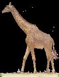 Giraffe 1.8 m neck - John Duffield duffield-design