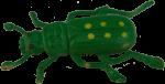 Green Beetle Bev Dunbar Maths Matters