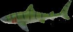 Green Shark Bev Dunbar Maths Matters