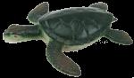 Green Turtle Bev Dunbar Maths Matters