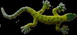 Green lizard - toys - Bev Dunbar Maths Matters