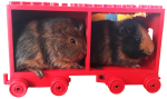 Guinea Pig Trainload Bev Dunbar Maths Matters