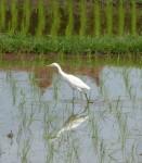 Heron Reflection Bali Bev Dunbar Maths Matters