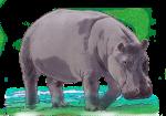 Hippo - John Duffield duffield-design