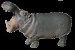 Hippo Thirds - 1 out of 3 hippos - Bev Dunbar Maths Matters