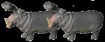 Hippo Thirds - 2 out of 3 hippos - Bev Dunbar Maths Matters