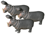 Hippo Thirds - 3 out of 3 hippos - Bev Dunbar Maths Matters