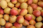 Counting - How many Mangoes Bev Dunbar Maths Matters