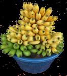 Counting - How many bananas Bev Dunbar Maths Matters