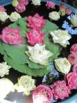 Counting - How many waterlilies Bangkok Bev Dunbar Maths Matters