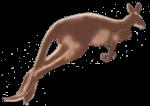 Kangaroo Hopping John Duffield duffield-design
