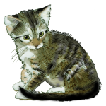 Kitten 12 weeks - John Duffield duffield-design