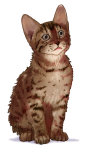 Kitten 16 weeks - John Duffield duffield-design