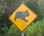 Koalas cross here Square Road Sign Bev Dunbar Maths Matters