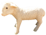 Lamb standing - farm animals - Bev Dunbar Maths Matters