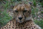 Leopard 2 Bev Dunbar Maths Matters