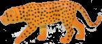 Leopard Bev Dunbar Maths Matters