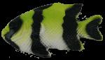 Lime Black Fish Bev Dunbar Maths Matters